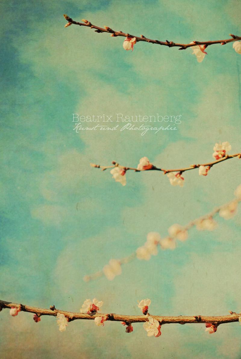 Blütenzweige - Spring S klein